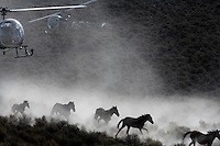 Dust rises from the dry rangeland as BLM contractors use two helicopters to gather almost 900 horses that have little food in the Nevada desert.<br /> Cattor Livestock Roundup Inc out of Nephi, Utah rounded up the horses that were shipped to Palomino Valley.  <br /> Under the stress of malnutrition, dehydration and the changes in their environment and diet, some of the horses contracted salmonella, which complicated recovery efforts. Eventually 159 horses died, though others recovered from the sickness, and some never contracted the illness at all.