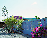 A cactus, palm tree and a pink bougainvillea are set in flowerbeds adjacent to a latticework concrete wall painted a shimmering blue