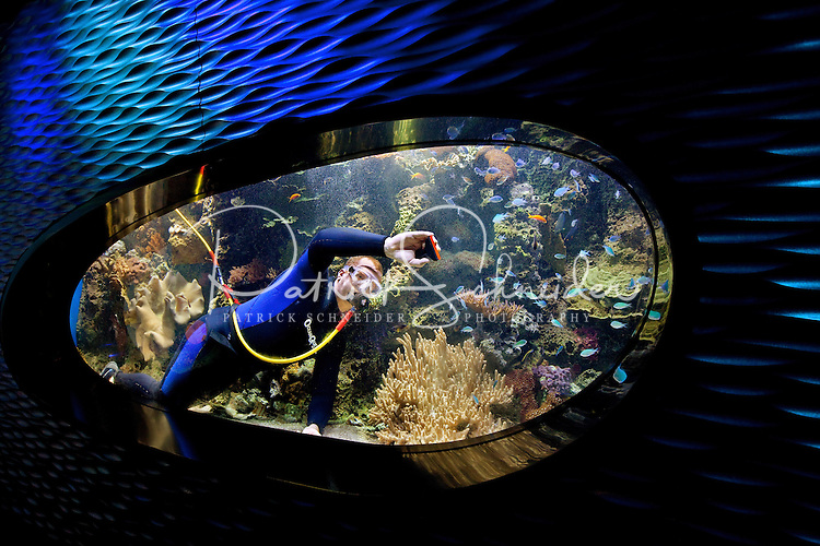 Charlotte, NC on-location photography of Discovery Place, Charlotte's hands-on science museum located in downtown Charlotte NC. In this image, a scuba diver cleans a fish tank from the inside, in the aquarium area.