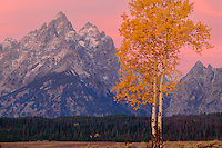 Aspen and Grand Teton at sunrise<br />