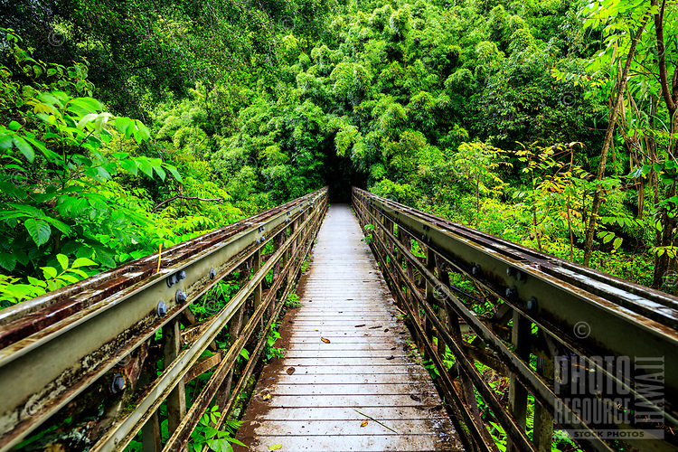 Bridge to the popular large bamboo forest along Pipiwai Trail, Haleakala National Park, Hana, Maui.