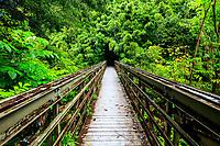 Bridge to the popular large bamboo forest along Pipiwai Trail, Haleakala National Park, Hana, Maui.