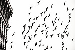 A flock of birds flying off the roof of an old building