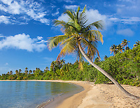 Vieques, Puerto Rico: Palm tree leans out over a secluded sandy beach at Green Beach (Punta Arenas)