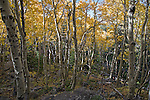 Rocky Mountain National Park, September, 2014