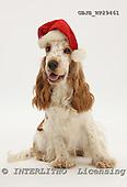 Kim, CHRISTMAS ANIMALS, photos, GBJBWP29461,#XA# stickers