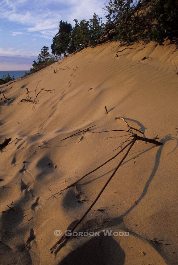 Sand Dune, Dunes Beach, Pinery Provincial Park, Ontario