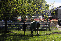 May 1, 2014: Scenes on the backside at Churchill Downs in Louisville, KY. Zoe Metz/ESW/CSM