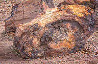 Petrified wood in the Petrified Forest Natioanl Park on Route 66.