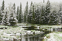 Late May snowy morning at a stream in Riding Mountain National Park