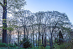 Oak trees at sunrise from Peters Hill at the Arnold Arboretum in the Jamaica Plain neighborhood, Boston, Massachusetts, USA