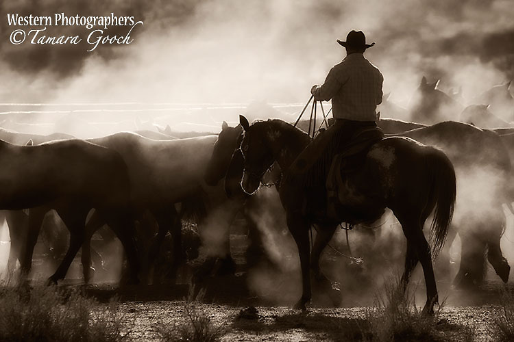 A photo of a working cowboy herding wet cold ranch horses whos bodies are steaming.