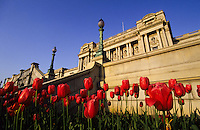 Capitol in Washington DC, USA