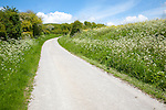 Road climbing chalk downland Allington Down, Wiltshire, England