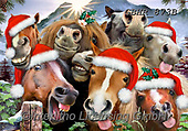 Howard, SELFIES, paintings+++++,GBHR873B,#Selfies#, Christmas,#xa# ,horses