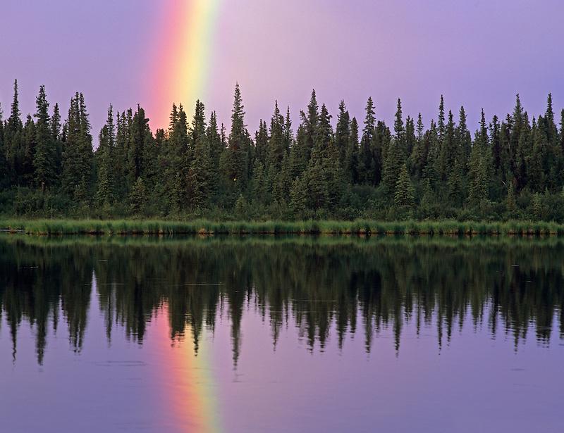 Rainbow reflected in backwaters of Gulkana River, Alaska