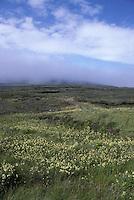 Birsay Moor, Orkney, Scotland, UK