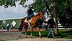 BALTIMORE, MD - MAY 15: Good Magic heads to the track to train for the Preakness at Pimlico Race Course on May 15, 2018 in Baltimore, Maryland (Photo by Scott Serio/Eclipse Sportswire/Getty Images)
