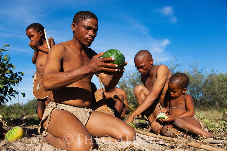 Botswana, Kalahari, bushman (san) family gathering food, man eating Nara melon (Acanthosicyos horridus)