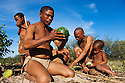 Botswana, Kalahari, bushman (san) family gathering food, man eating Nara melon (Acanthosicyos horridus)