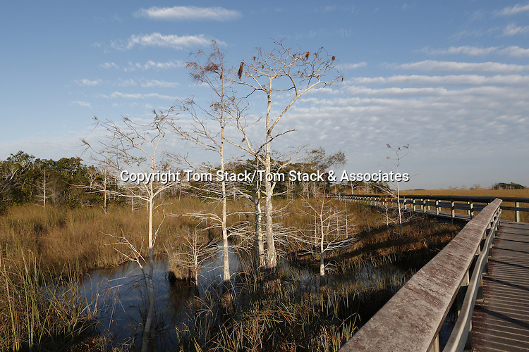 A boardwalk through Everglades National Park, Florida