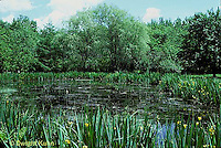 PO01-012b  Pond with water plants