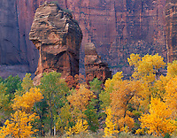 Zion National Park, UT<br /> The Pulpit surrounded by cottonwood trees and desert varnished Navajo sandstone in the Temple of Sinawava in autumn