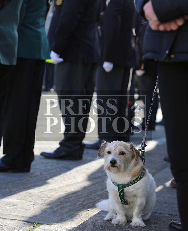 Scrappy the Dog at the annual Drogheda Remembrance Day ceremony at Mary Street.<br /> <br /> <br /> photo - Jenny Matthews