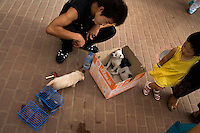 A man sells puppies on a sidewalk in Lanzhou, Gansu, China.