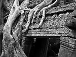 Ta Prohm Roots And Stone 15 - Silk-cotton tree roots growing over the inner enclosure Western gallery, Ta Prohm Temple, Angkor, Cambodia