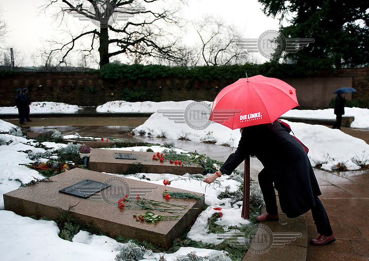 A supporter of the political party Die Linke (The Left) places a rose on the grave of  Karl Liebknecht, at a memorial event held for Rosa Luxemburg and Karl Liebknecht in the Friedrichsfelde Cemetery, where they are both buried..