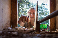 Skye Harnsberger '17, VP of Club Affairs, collects eggs from one of the two chicken coops.<br /> Photo from the F.E.A.S.T (Food Energy and Sustainability Team) student-run organic garden at UEPI, Oct. 1, 2015.<br /> (Photo by Marc Campos, Occidental College Photographer)