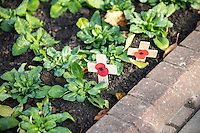 Pictured: Wooden crosses with poppies in the garden near the cenotaph at the cenotaph Friday 11 November 2016<br /> Re: Remembrance Day service at the Cenotaph in Cardiff, south Wales, UK.