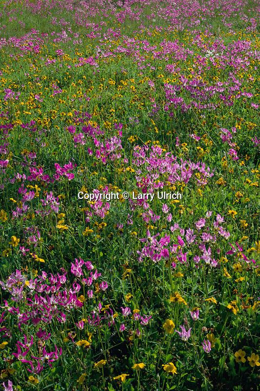Padres shooting star and  johnny-jump-ups <br /> Gabilan Range<br /> Pinnacles National Monument<br /> San Benito County,  California