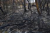 Fire damage to trees & scrub near the Motutangi swamp, Houhora.