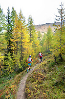 Running through a golden larch forest while on the Via Valais, a multi-day trail running tour connecting Verbier with Zermatt, Switzerland.