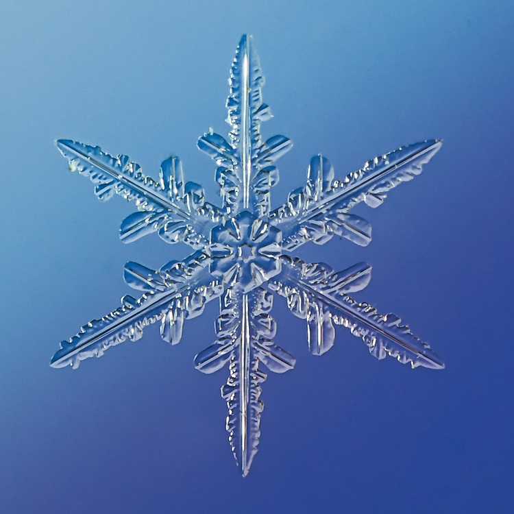 Snowflake Kraz - Stellar Dendrite Snowflake