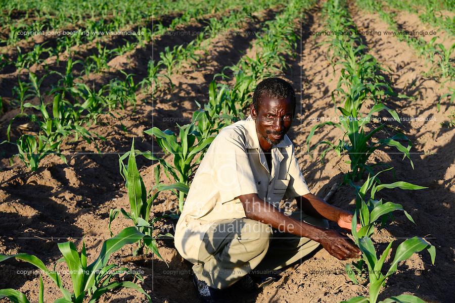 TANZANIA Region Mara, Musoma,  village Bokabwa, Kuria tribe, subsistence farmer in maize field, the soil is very dry due to lack of rain / TANSANIA Region Mara, Musoma,  Dorf Bokabwa, Kuria Ethnie, Subsistenzbauer in seinem Maisfeld, der Boden ist sehr trocken, da der Regen bisher ausgeblieben ist