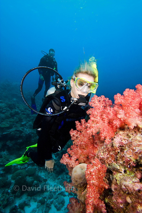 Divers (MR) and alcyonarian soft coral on a reef, Palau, Micronesia.