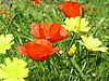 meadwo in spring in Majorca<br /> <br /> pradera en primavera en Mallorca<br /> <br /> Frühlingswiese auf Mallorca<br /> <br /> 2272 x 1704 px<br /> 150 dpi: 38,47 x 28,85 cm<br /> 300 dpi: 19,24 x 14,43 cm