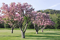 The Berkshires - Spring, Summer