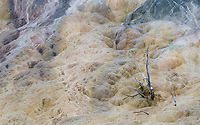 Runoff at Mammoth Hot Springs.