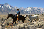 cowboy and horses near Mt. Whitney