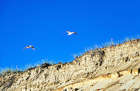 Seagulls soar over steep dune cliffs, Cape Cod National Seashore, Massachusetts, USA