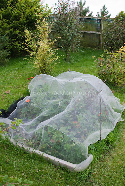 Covering plant crops from birds floating row covers for How to protect your garden from animals
