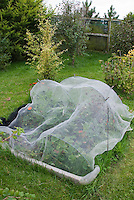 Protecting plants strawberries from birds and animals with netting arbor, in Joy Larkcom's garden, Ireland