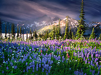 Wildflowers and Tatoosh Mountains. Mt. Rainier National Park, Washington Sky has been added