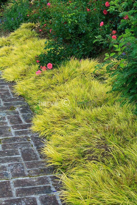 """Jardins du pays d'Auge (mention obligatoire dans la légende ou le crédit photo):.dans """"le jardin de l'amour courtois"""", bordure d' Acorus gramineus 'Minimus Aureus' (et rosiers)."""