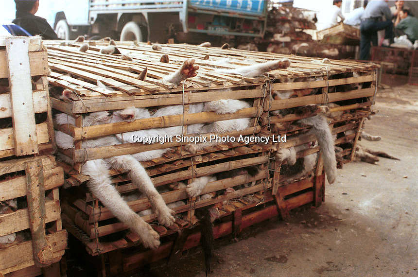 Cats are stored in bamboo crates at a huge wild animal market that specializes in cat meat. Cats are commonly reared in the Chinese countryside specifically for sale to restaurants, where cat meat is now very popular...PHOTO BY SINOPIX