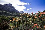 In the Kirstenbosch Botanical Gardens, Capetown.